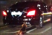 Dog Dragged to Death on Back of Car