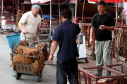 Dogs in cages at Moran market