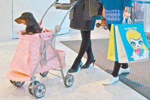 dog-prams-strollers-pushchairs-south-korea