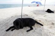korea-dog-beach
